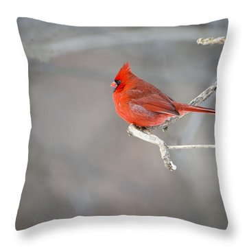 Northern Cardinal 2 Throw Pillow