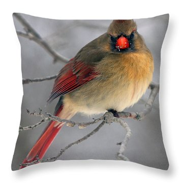 Northern Cardinal Female Throw Pillow by Timothy McIntyre