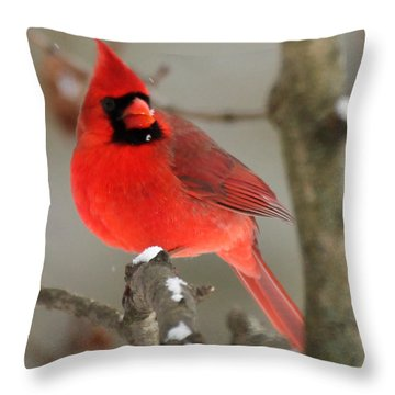 Northern Cardinal In Winter I Throw Pillow