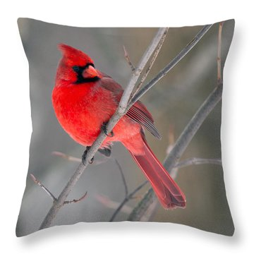 Northern Cardinal  Throw Pillow by Timothy McIntyre