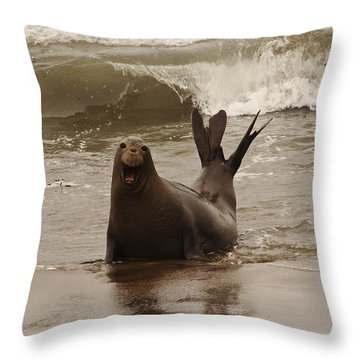 Throw Pillow featuring the photograph Northern Elephant Seal by Lee Kirchhevel