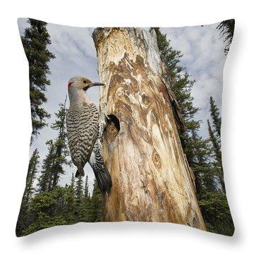 Northern Flicker At Nest Cavity Throw Pillow