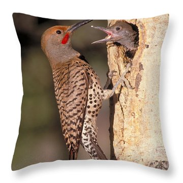 Northern Flicker At Nest Throw Pillow