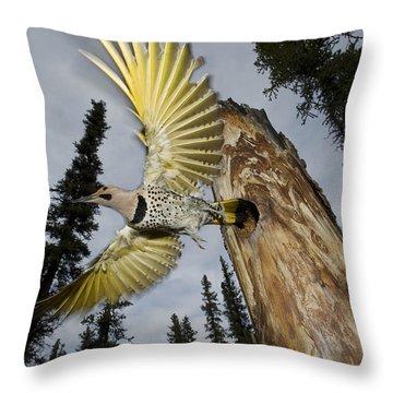Northern Flicker Leaving Nest Cavity Throw Pillow