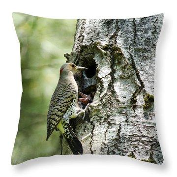 Northern Flicker Nest Throw Pillow