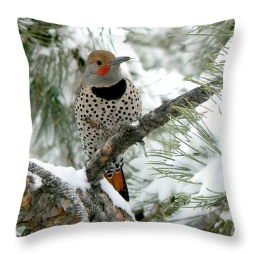 Northern Flicker On Snowy Pine Throw Pillow