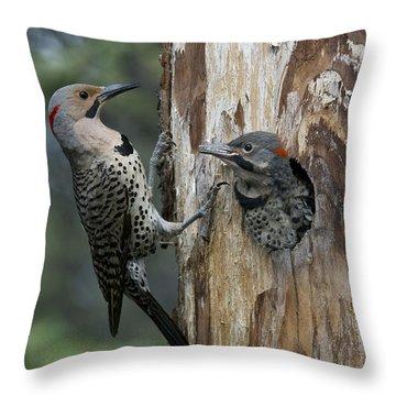 Northern Flicker Parent At Nest Cavity Throw Pillow
