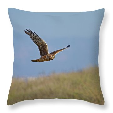 Northern Harrier In Flight Throw Pillow by Duncan Selby