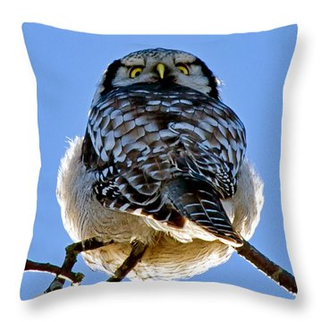 Northern Hawk Owl Looks Around Throw Pillow