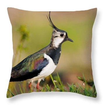 Northern Lapwing Throw Pillow