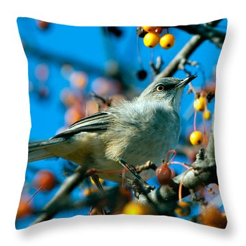 Northern Mockingbird Throw Pillow by Bob Orsillo