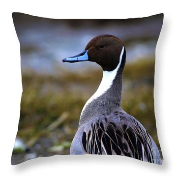 Northern Pintail Duck Throw Pillow