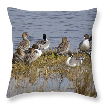 Northern Pintail Ducks Throw Pillow by Carol  Bradley