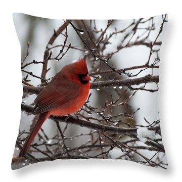 Throw Pillow featuring the photograph Northern Red Cardinal In Winter by Jeff Folger