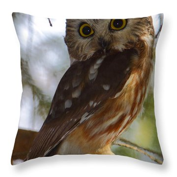 Northern Saw-whet Owl II Throw Pillow