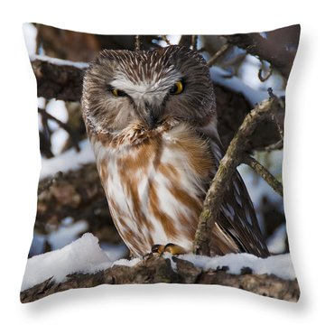 Northern Saw-whet Owl.. Throw Pillow by Nina Stavlund