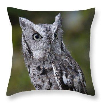Northern Screech Owl Throw Pillow