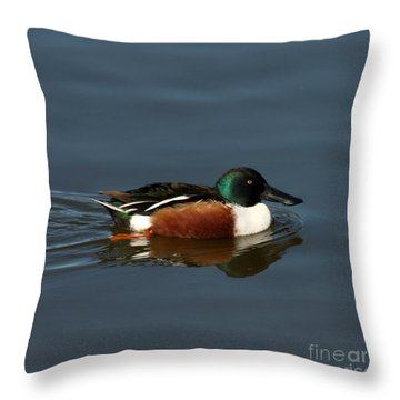 Throw Pillow featuring the photograph Northern Shoveler by Bob and Jan Shriner
