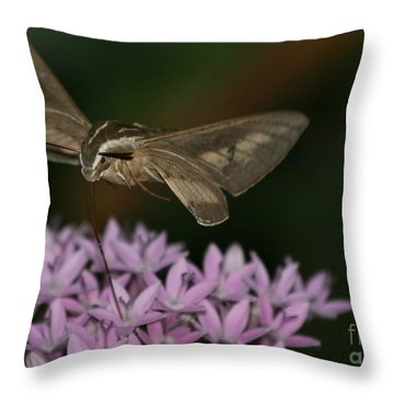Not A Hummer Throw Pillow by Marty Fancy
