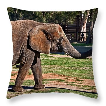 Not Snack There Throw Pillow