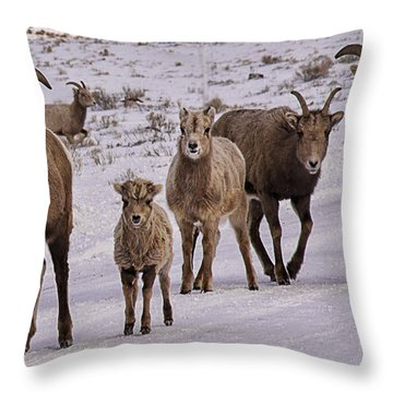 Throw Pillow featuring the photograph Not Too Sheepish by Priscilla Burgers