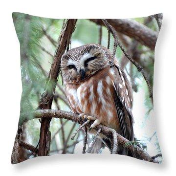 Northern Saw-whet Owl 2 Throw Pillow