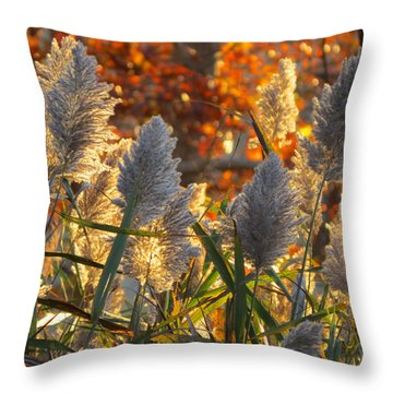 November Lights Throw Pillow by Dianne Cowen