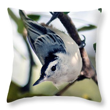 Nuthatch 623 Throw Pillow