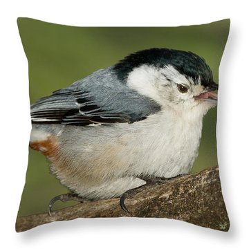 Nuthatch Throw Pillow by Bill Wakeley