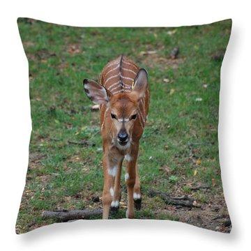 Nyala Throw Pillow by DejaVu Designs