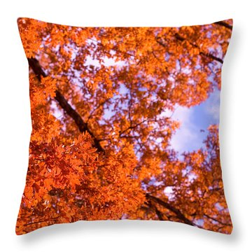 Throw Pillow featuring the photograph Oak In Evening Sun by Denise Beverly