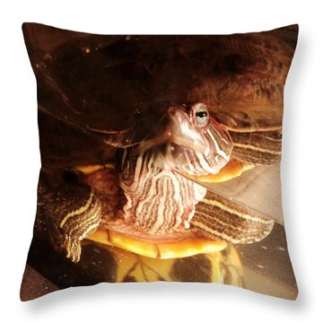 Throw Pillow featuring the photograph Observer And Observee by Thomasina Durkay