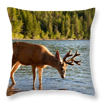 Oh Deer Is That Me Throw Pillow by Bruce Gourley