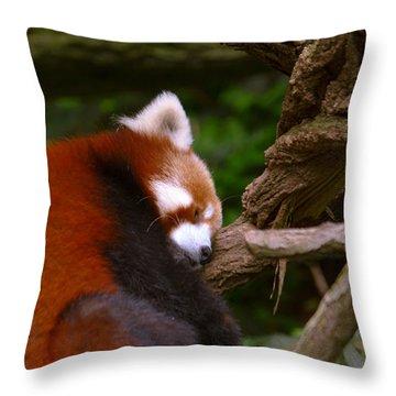 Oh So Sleepy Throw Pillow