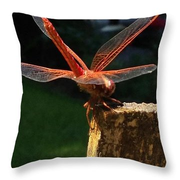 Ok, 10 Photos Are Enough! Step Away Throw Pillow