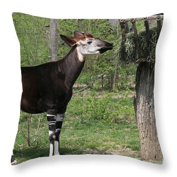 Okapi Throw Pillow by Judy Whitton