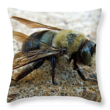 Throw Pillow featuring the photograph Old Carpenter Bee by Pete Trenholm