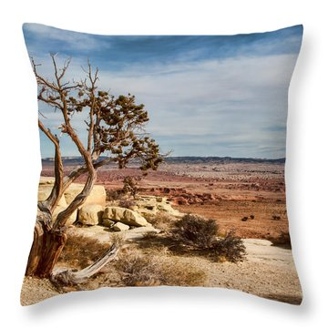 Old Desert Cypress Struggles To Survive Throw Pillow by Michael Flood