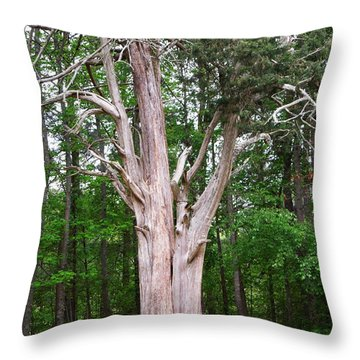 Throw Pillow featuring the photograph Old Georgia Cedar by Pete Trenholm