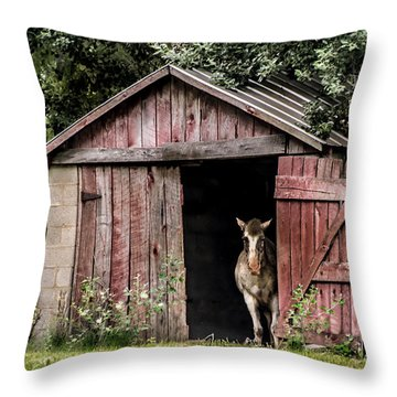 Old Gray Mare Throw Pillow by Debbie Green