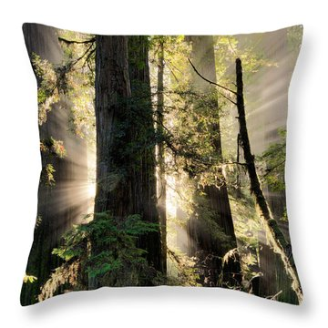 Old Growth Forest Light Throw Pillow