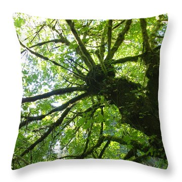 Old Growth Tree In Forest Throw Pillow