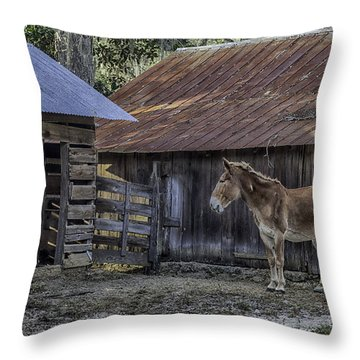 Old Red Mule Throw Pillow by Lynn Palmer