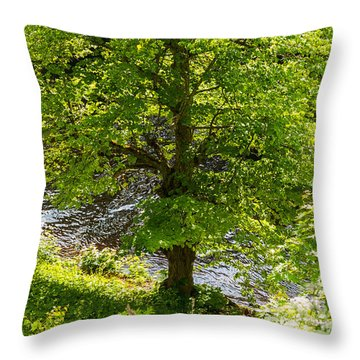 Old Small Leaved Lime At The Riverbank In Oravi Throw Pillow
