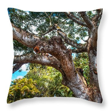 Old Tree In Eureka. Mauritius Throw Pillow by Jenny Rainbow