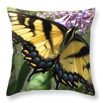 Throw Pillow featuring the photograph Old World Swallowtail by Jennifer Wheatley Wolf