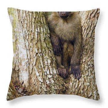 Olive Baboon Juvenile Kibale Np Uganda Throw Pillow