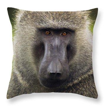 Olive Baboon Male Kibale Np Uganda Throw Pillow