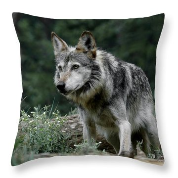 On Alert Throw Pillow by Ernie Echols