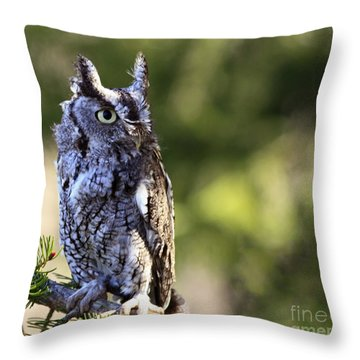 On Alert Majestic Eastern Screech Owl  Throw Pillow by Inspired Nature Photography Fine Art Photography